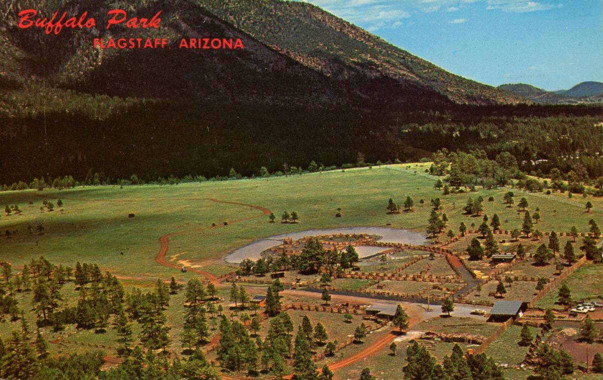 buffalo aerial postcard