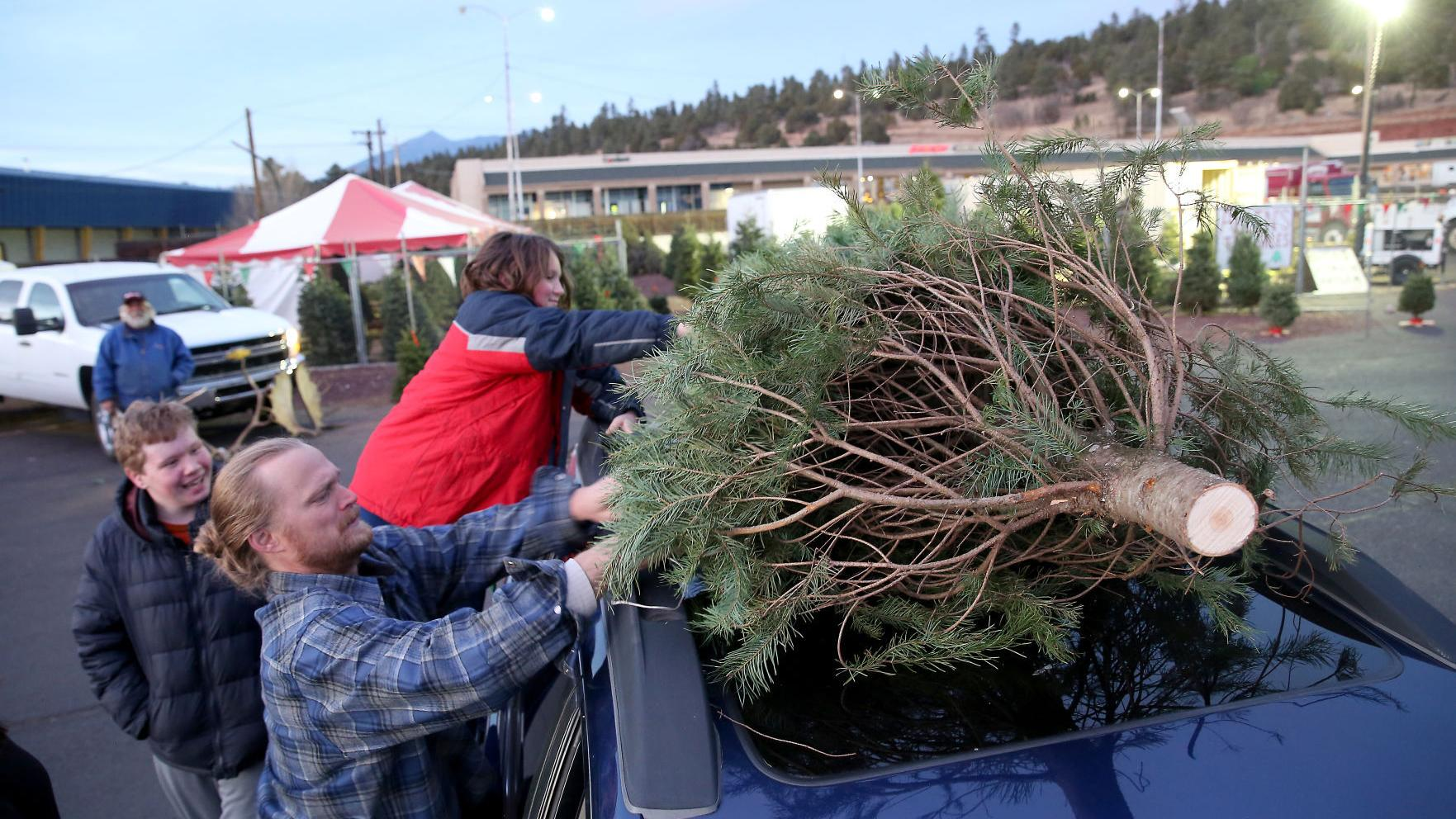 "Flagstaff Christmas tree sales struggle; forest ""cut-your-own"" surges"