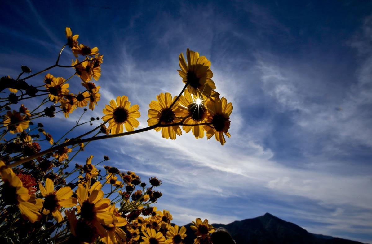 TRAVEL UST-DESERT-WILDFLOWERS 6 LA