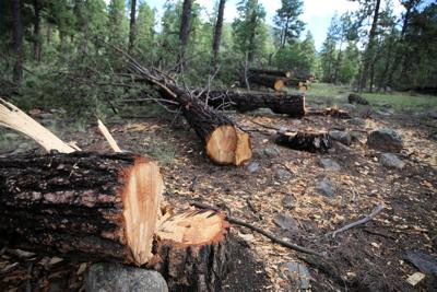 Flagstaff Watershed Protection Project