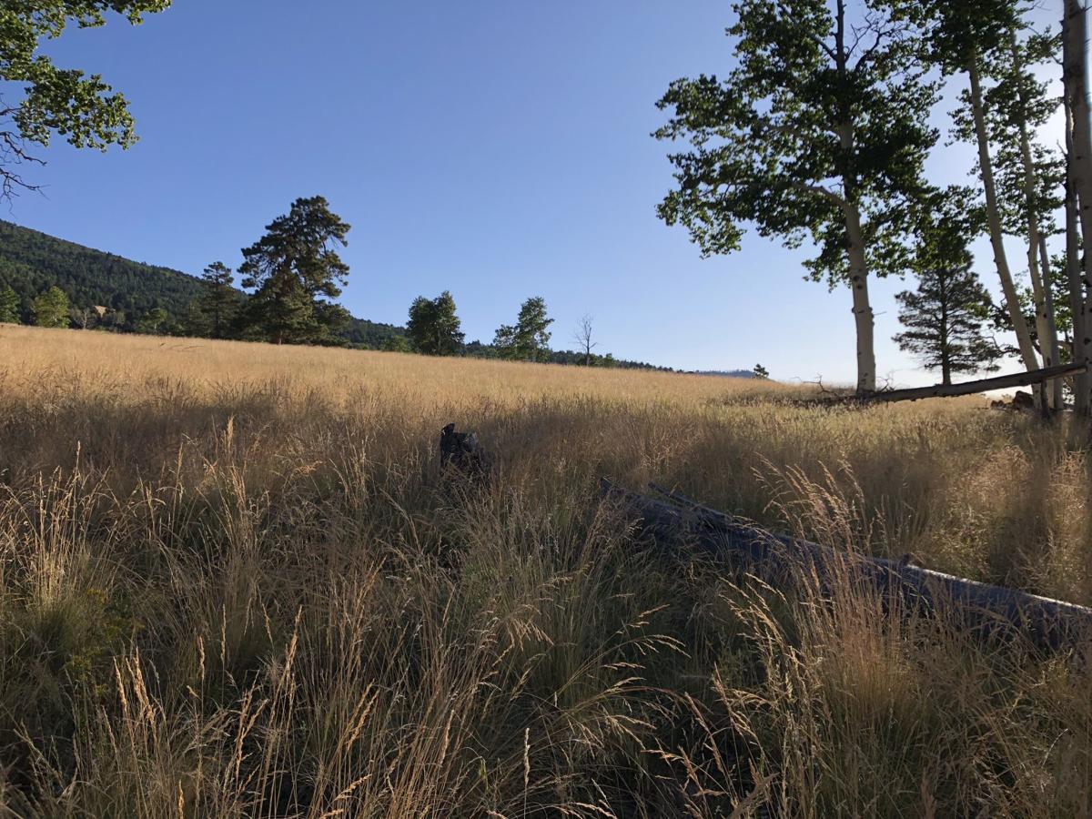 Kachina meadow