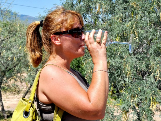 Verde Valley vineyards