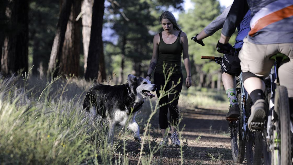 SUNDAY FEATURE: Lessons in trail etiquette: A look at sharing space in Flagstaff