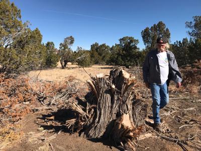Steven Kenyon and juniper stump