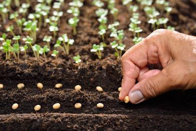Planting seeds stock photo