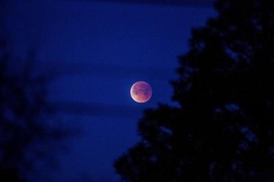 Lunar Eclipse Super Blue Moon (copy)