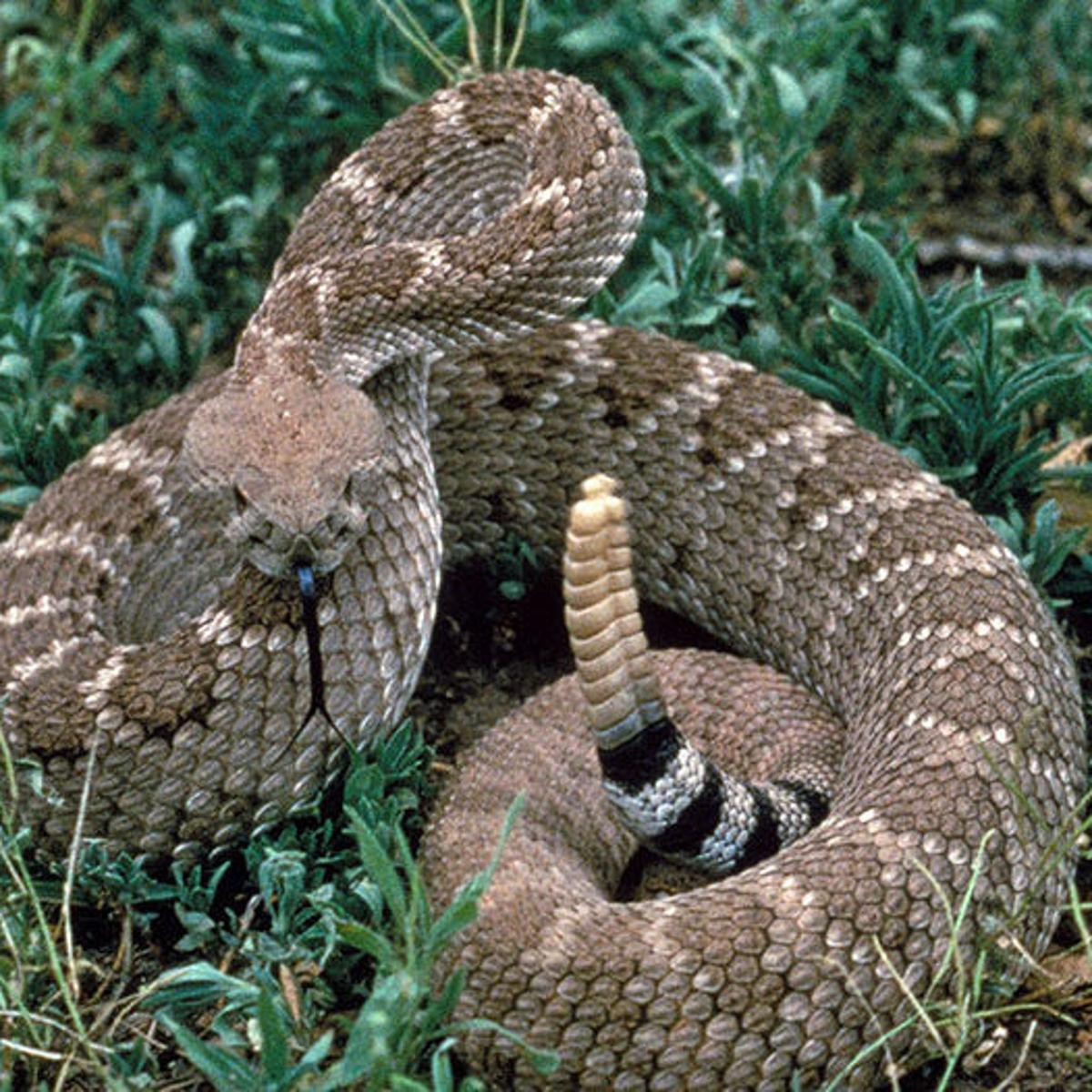 London Zoo Beware Of Snakes On A Plain Or Desert Or Foothill Pets Azdailysun Com