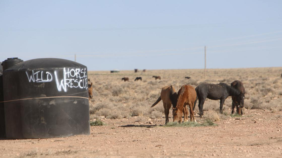 Against the wind: Wild horse relief volunteers continue their cause amid the Navajo Nation pandemic