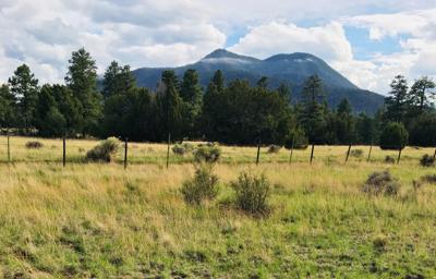 Area where elk were found dead