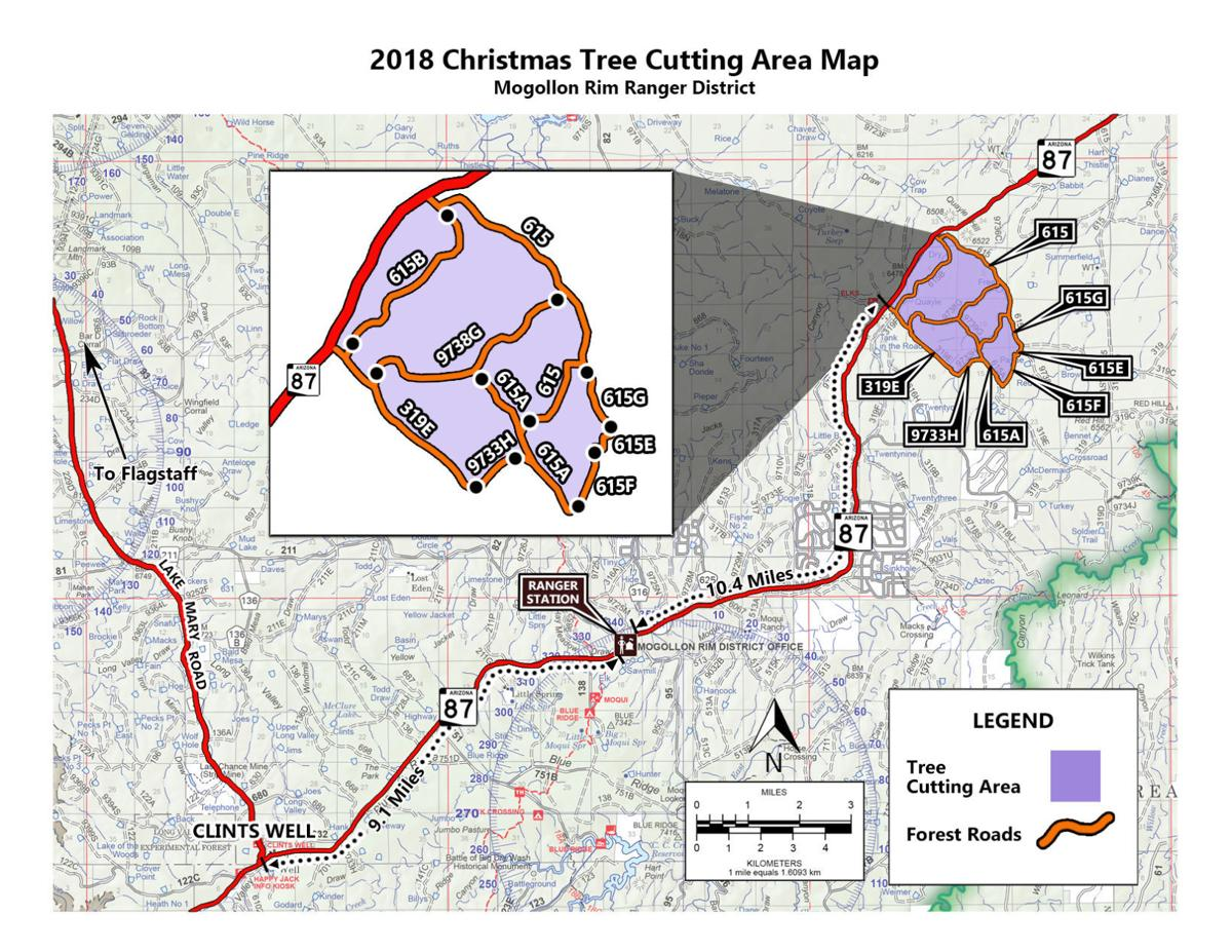 Coconino National Forest To Sell Christmas Tree Permits Beginning