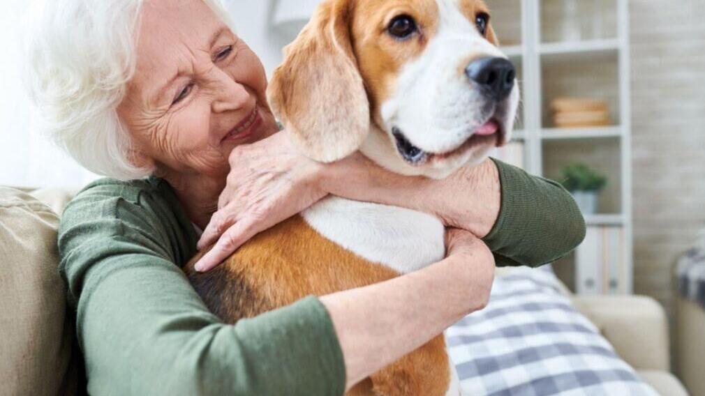 30 great dog breeds for seniors
