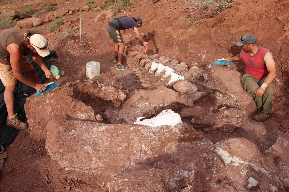 Dinosaur fossils could belong to the world's largest ever creature