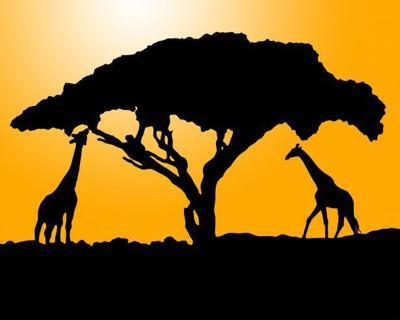 Giraffes at sunset stk