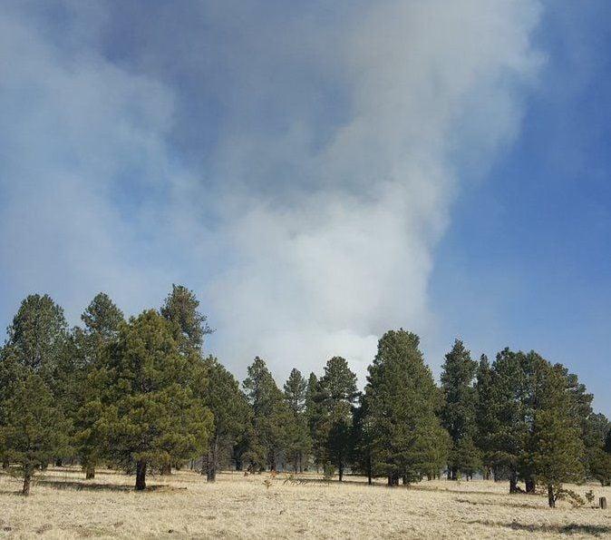 Smoke over trees