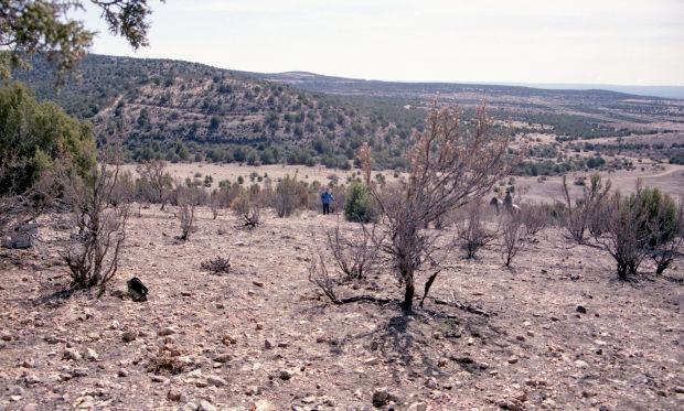 Hat Ranch Doe 1996