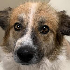 Pet of the Week: Brewster