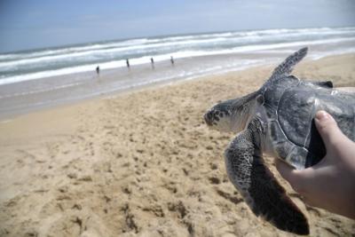 Beached Turtles