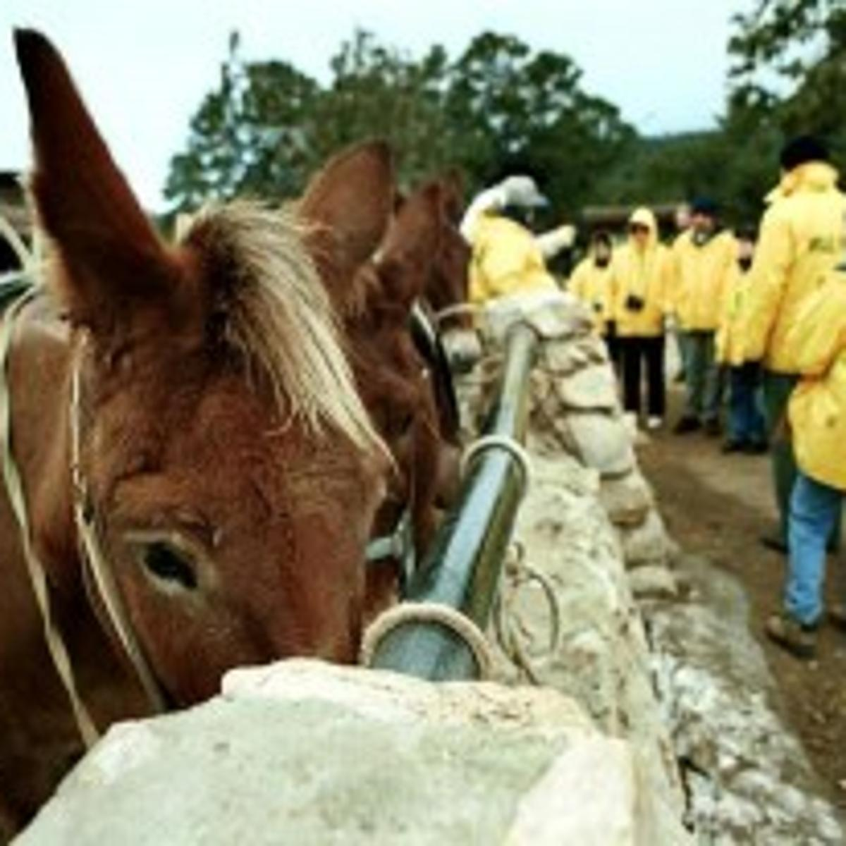 Proposal keeps mules on Canyon trails but scales back trips