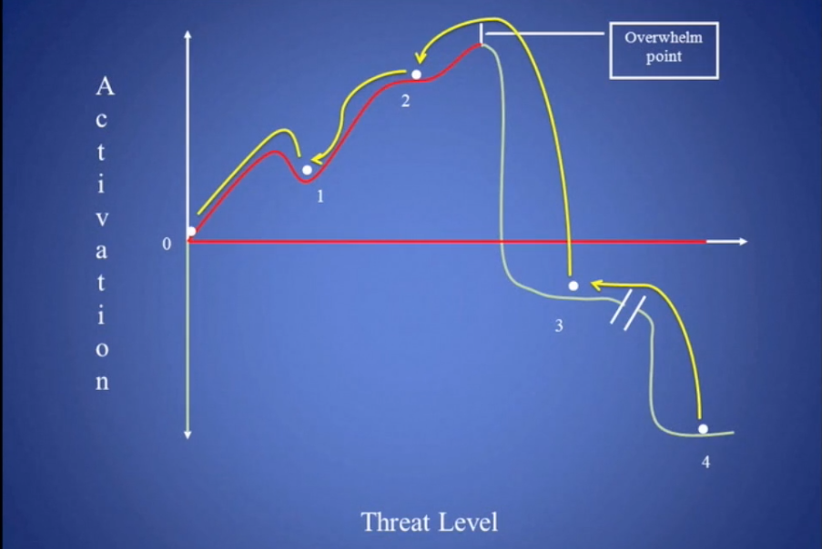 Razvi Trauma Dynamics Map