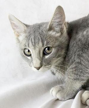 Pet of the Week: Nails