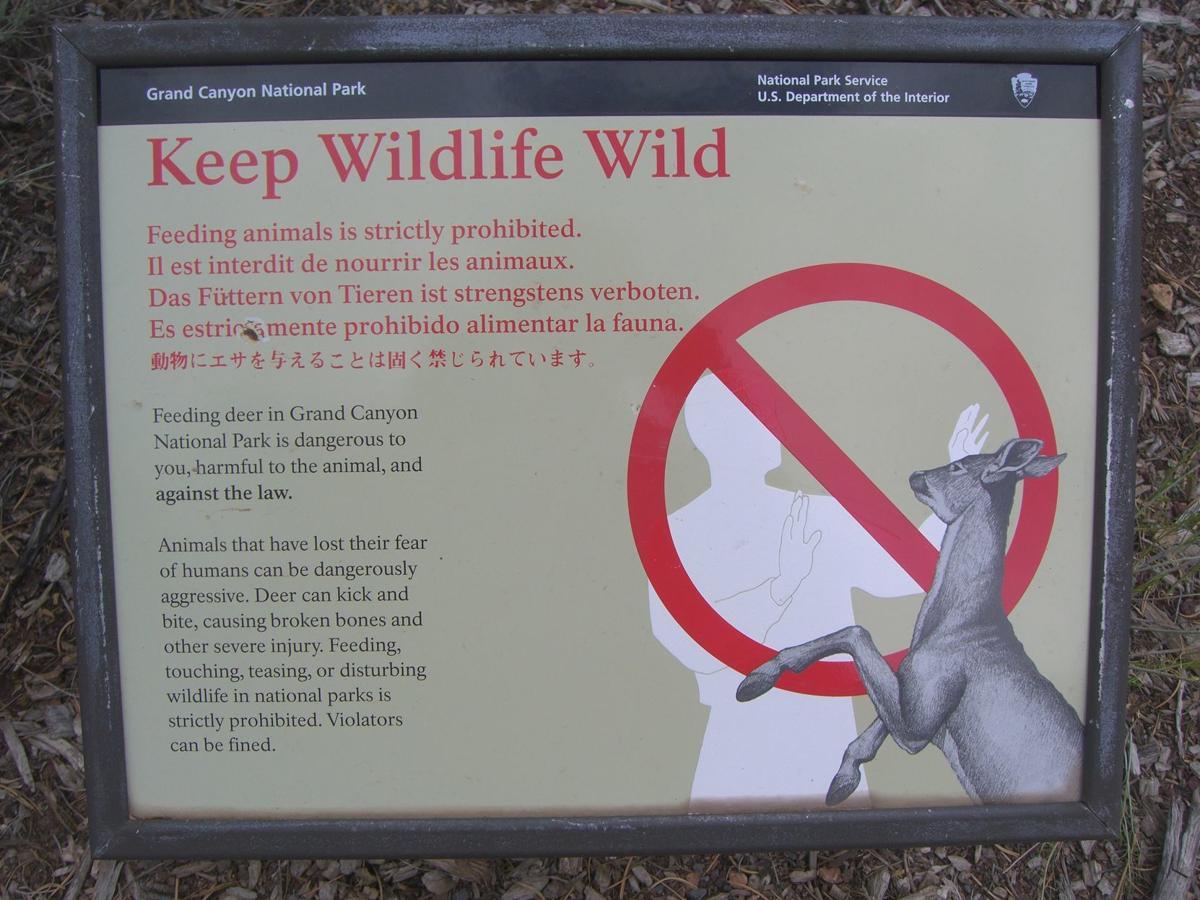 Wildlife at Grand Canyon