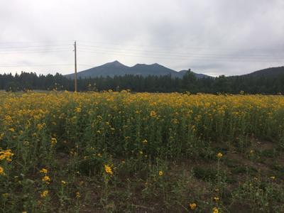 Schultz Pass Meadows