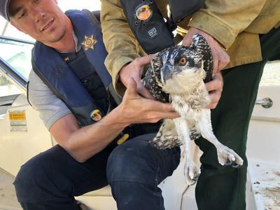 Osprey Evacuation