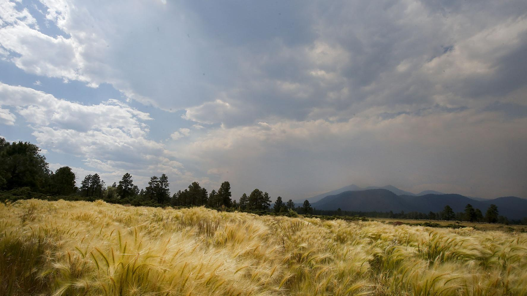 Too smoky to walk the dog in Flagstaff
