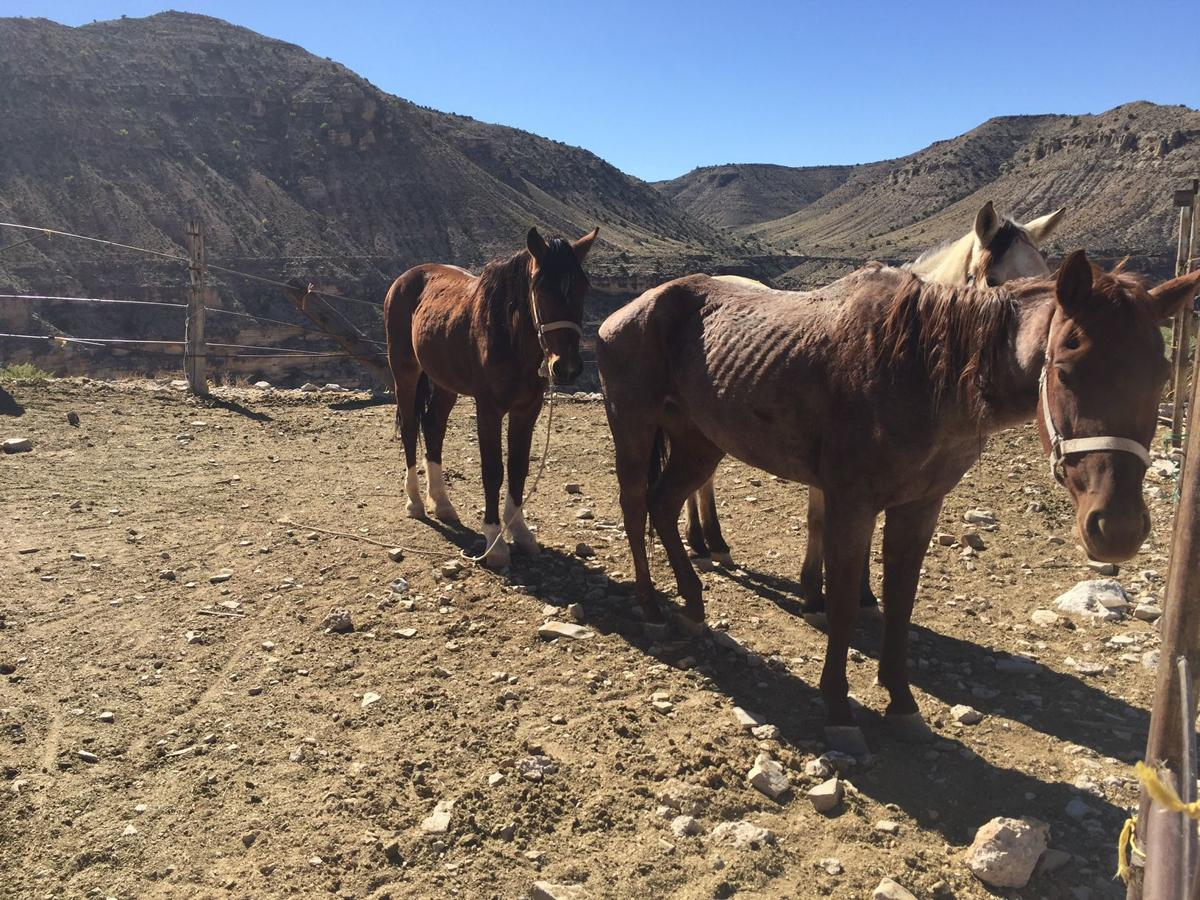 Horses on Hualapai Hilltop