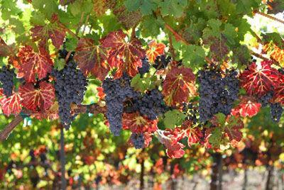 Paratus Vineyards