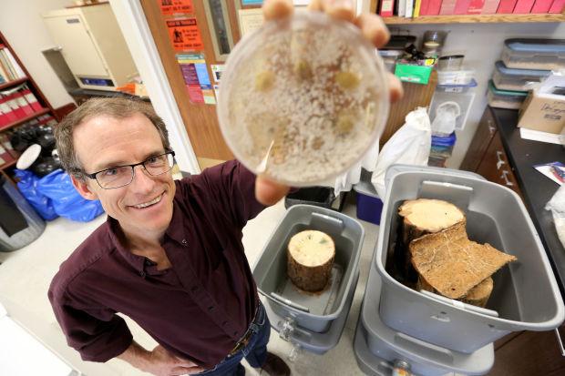 Fungus v Beetles