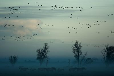 LFH birds