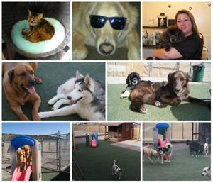 Wags And Whiskers Pet Resort Collage