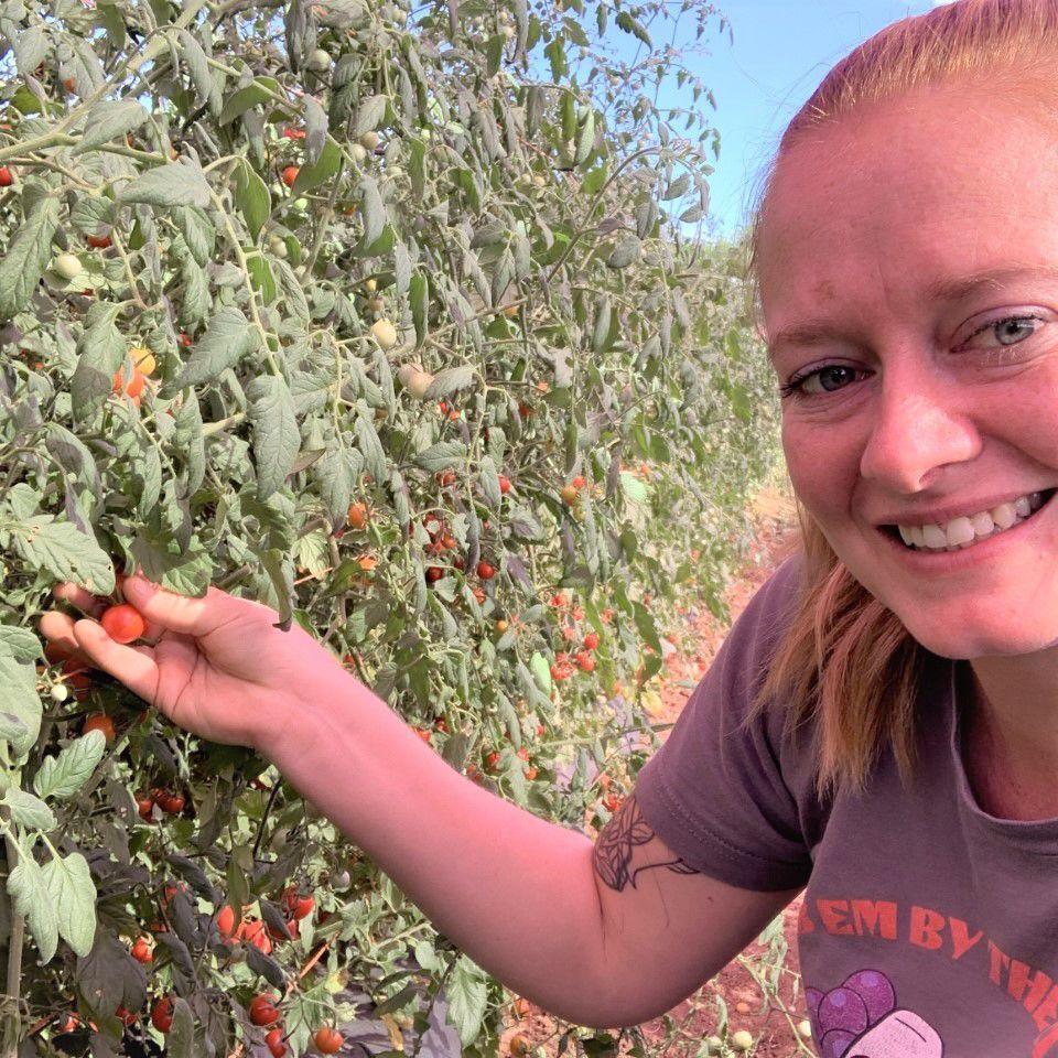 bri picking tomatoes square.jpg
