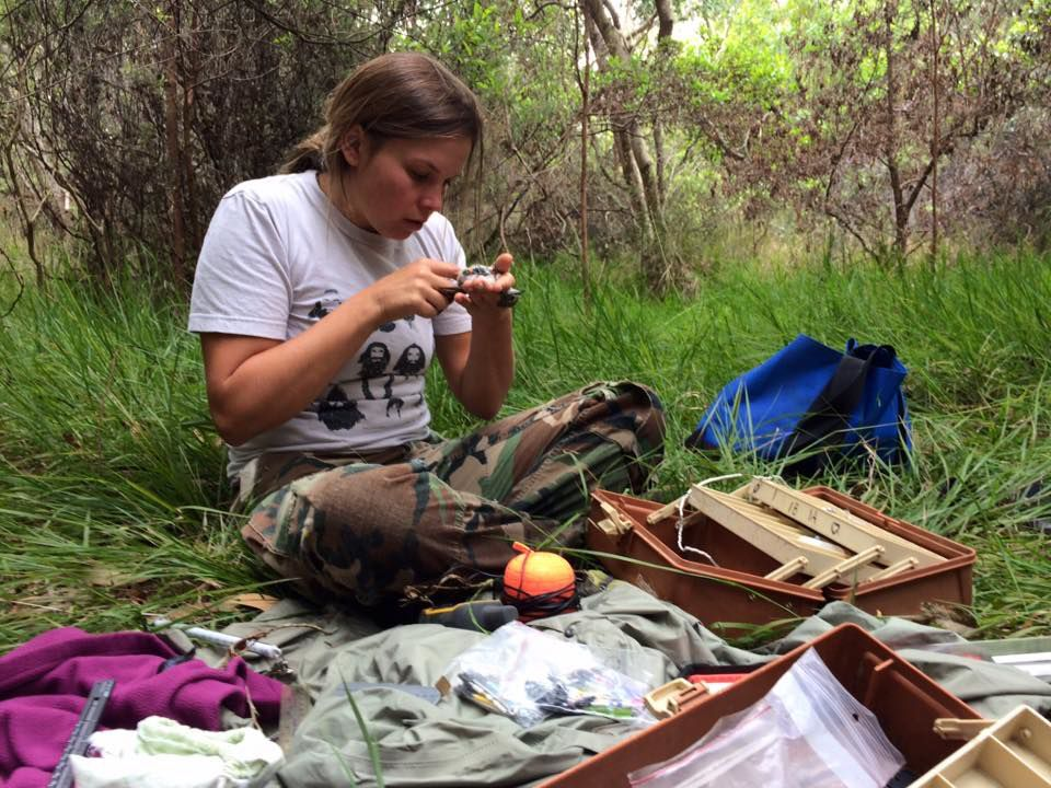 Bird banding in Hawaii Volcanoes National Park