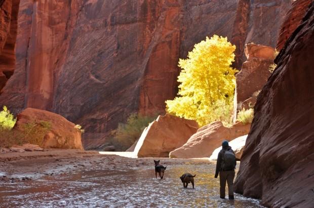 Crimson And Gold A Fall Paria Canyon Hike Recreation