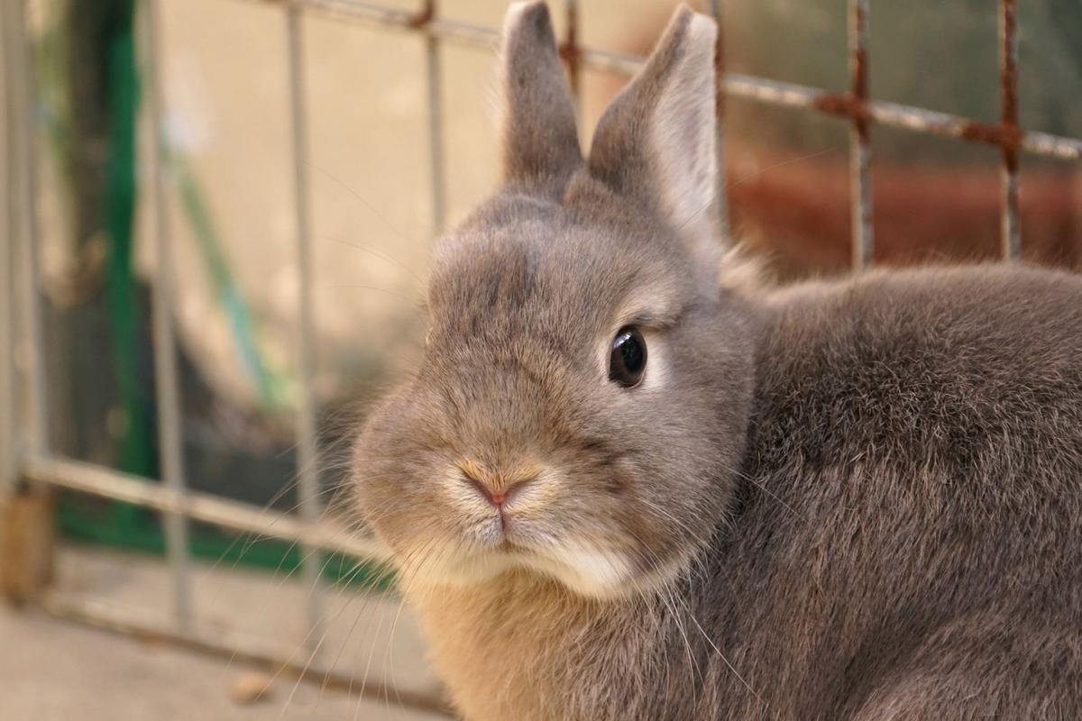 easter basket case fanciers warn of problems with bunnies for