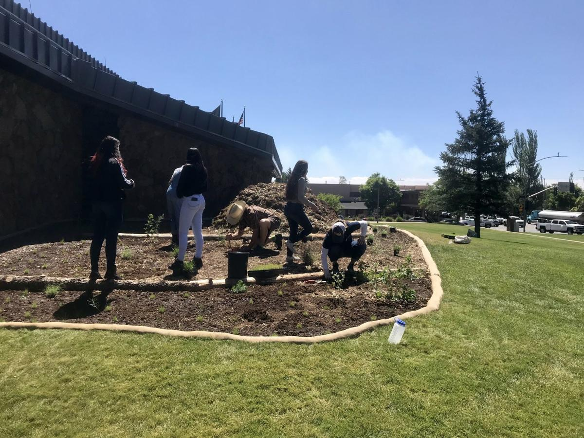 City hall lawn project