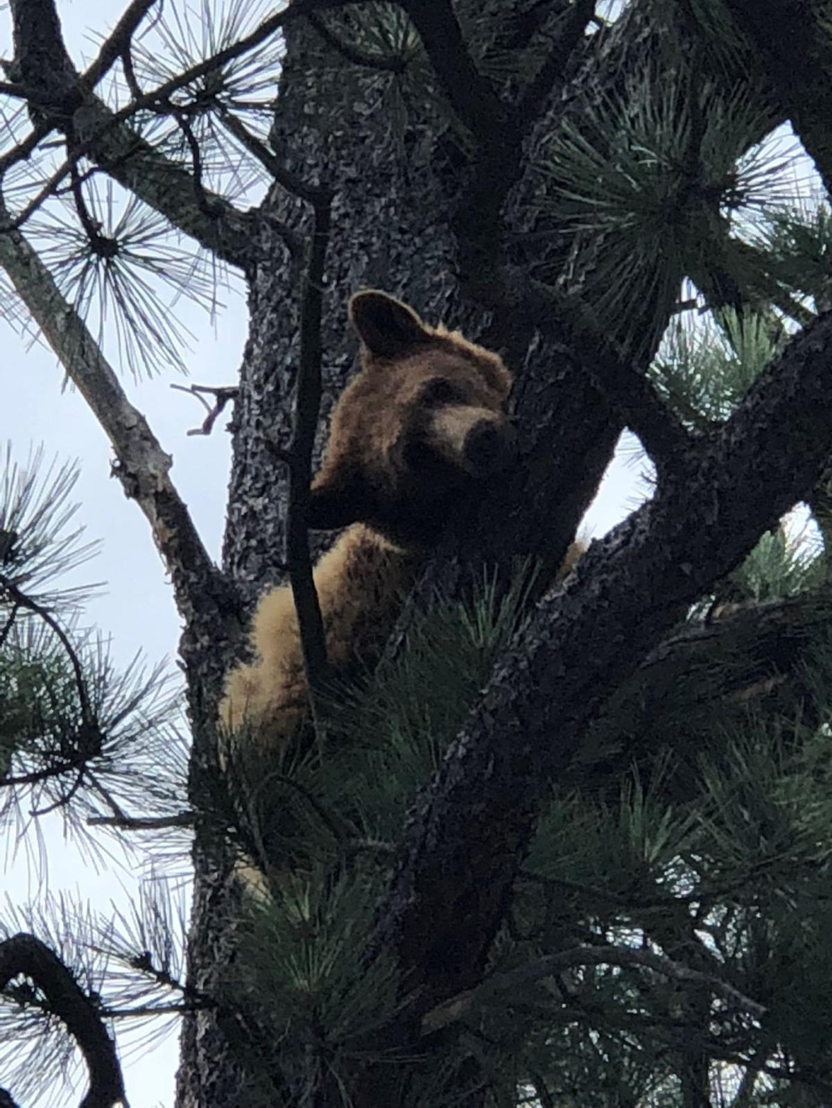 Black bear found on campus