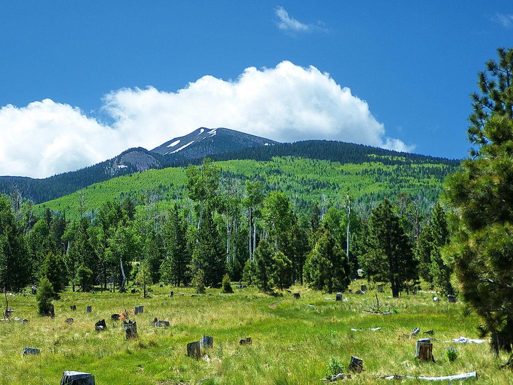 Aspen Loop Trail summer