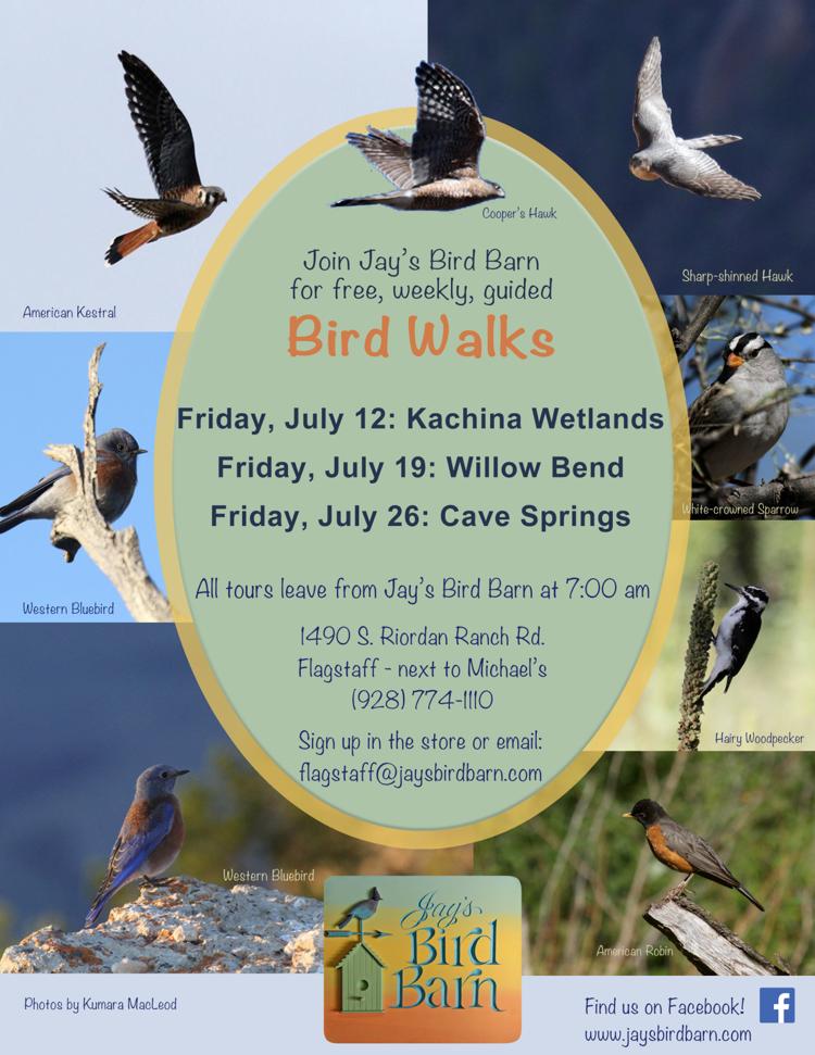 July bird walk flyer