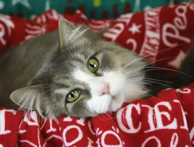 Pet of the Week: Simon (copy)