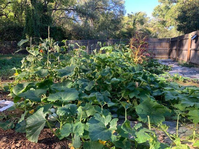 Wild Heart Farm pumpkin patch