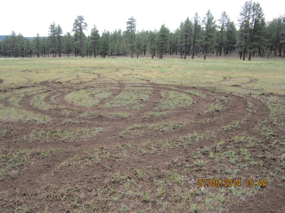 A meadow scarred by tracks