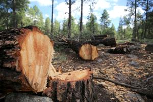 FWPP helicopter logging to be heard and seen this month