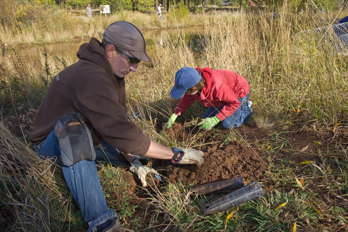 Planting cottonwoods at Frances Short Pond