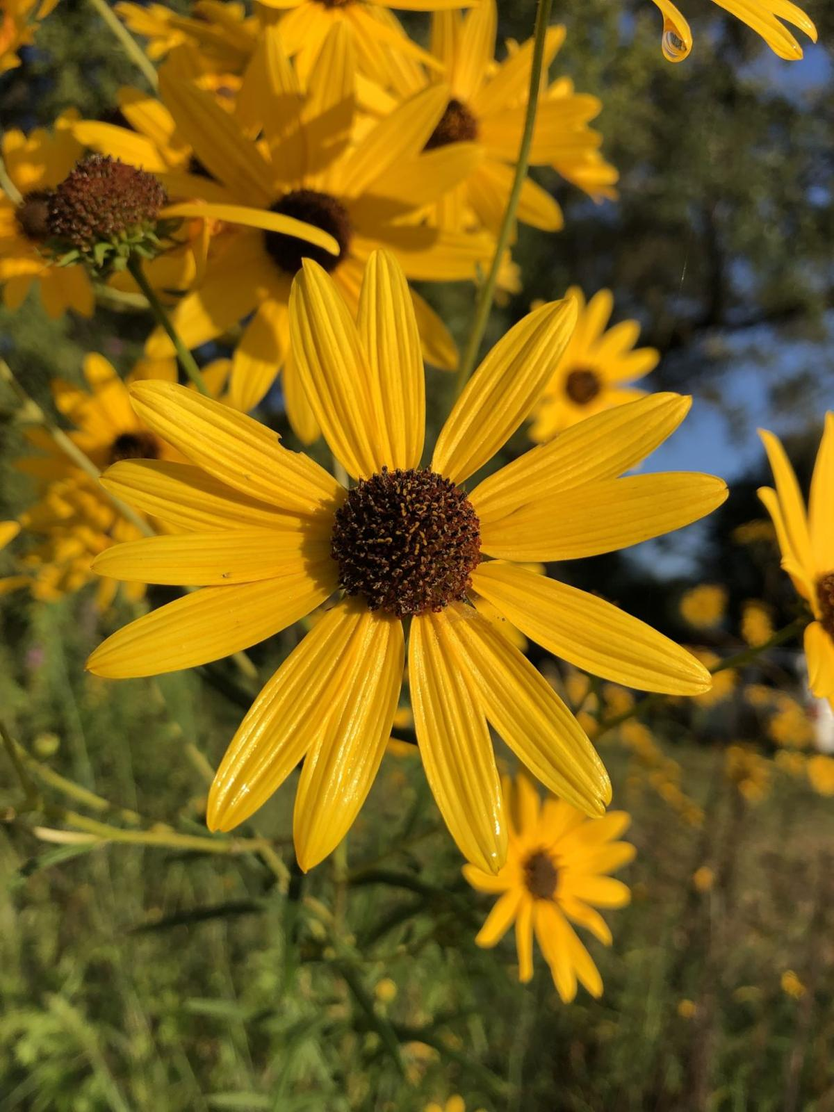 Native plants aren't for everyone, but they can be fun!