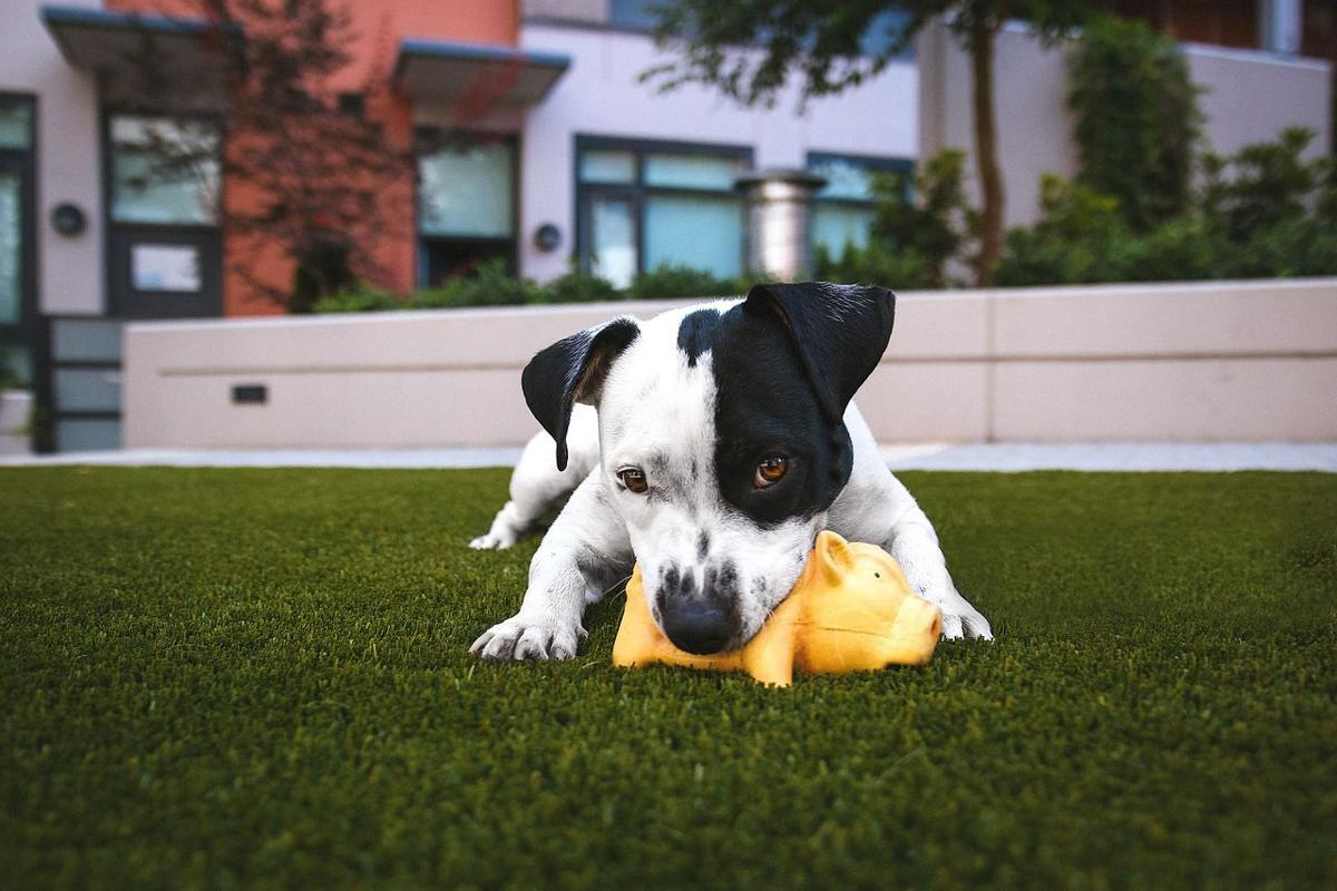 Pet Talk: How to 'Chews' the Best Dog Chew Toys