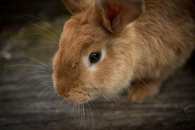 Pet Talk: Every-Bunny watch out for GI Stasis