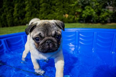 Pet Talk: Keep pets cool in the Summer Heat